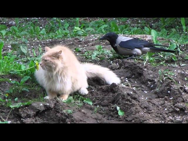 Кот и ворона часть 2