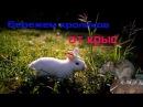 Как бороться с крысами в крольчатнике Личный опыт борьбы с крысами