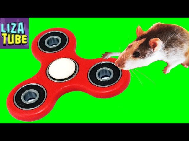 СПИНЕР для КРЫСОК Своими Руками Лиза и крыски DIY Spinner for Rats LizaTube