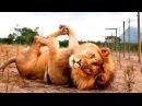 Красота диких животных - УДИВИТЕЛЬНЫЙ мир дикой природы