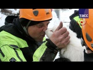 Итальянские спасатели нашли щенков в накрытом лавиной отеле