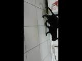 Васька у Ветеринара
