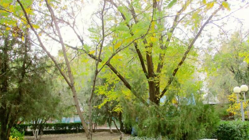 парк Аркадия.Моцарт