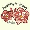 Адениум дома: семена суккулентов и экзотов.