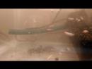 Домашний аквариум Рыбка петушок Разведение рыбок петушков Мальки петушков Dambo Чем кормить мальков