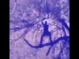 Armin Van Buuren vs. Vini Vici ft. Hilight Tribe