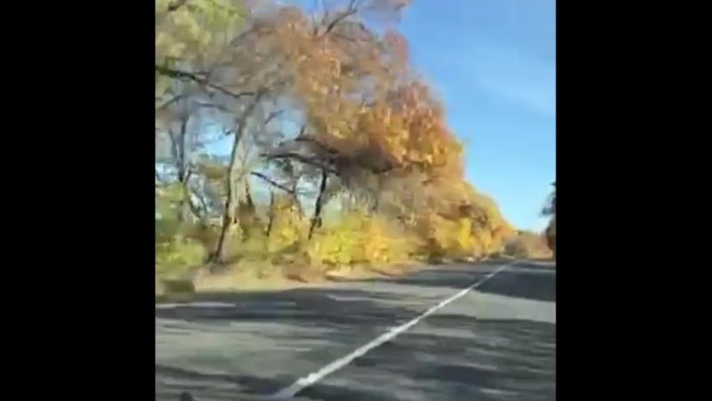 осень 🚘 мы в дороге 🍁