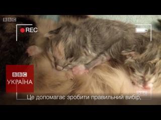 Подружжя цілодобово показує кошенят на Youtube