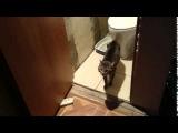 Дерзкая Кот не пускает поссать Фейсконтроль в Туалет Суровый охранник сортира