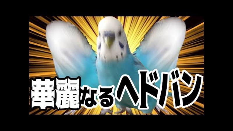 Очень неугомонный попугай