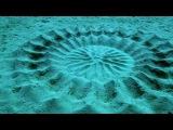 Самая невероятная рыба - Японский Иглобрюх - рыба художник