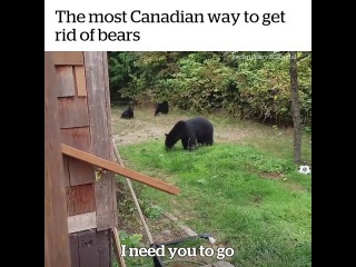 The most Canadian way to get rid of bears