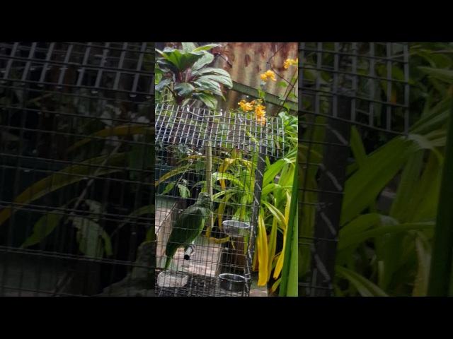 Parrot Sings in the Rain