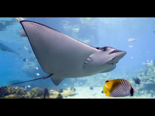 Дикая природа Удивительная природа барьерного рифа Австралии! HD lbrfz ghbhjlf elbdbntkmyfz ghbhjlf ,fhmthyjuj hbaf fdcnhfkbb!