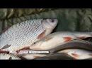 Календарь рыболова с 30 октября по 6 ноября 2017 года от телеканала Трофей
