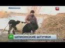 Курганскому фермеру грозит срок за покупку GPS-трекера для коровы