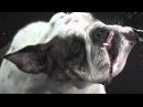 Meshuggah - Break Those Bones Whose Sinews Gave It Motion (Slow mo music video)