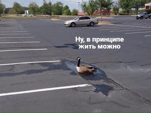 Живите лучше, чем уточки: https://www.sravni.ru/ipoteka/