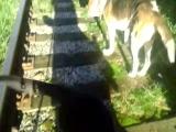 Дом инвалидов на прогулке.Дон,Тунгус и Боня...