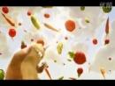 Film Animasi Lucu Hamster - YouTube