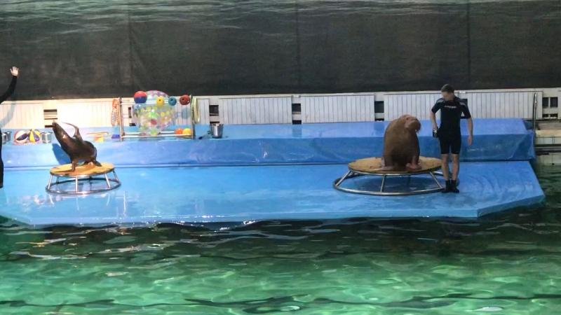 Дельфины 🐬 (Крестовский остров)