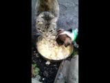 кошка и пёс