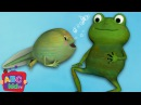 Frog Song Life Cycle of a Frog ABCkidTV