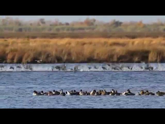 Deriya ü Balinden Rengin .Birds of the Mississippi River Delta . HD
