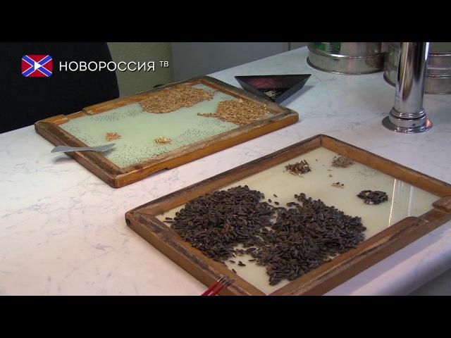 Контроль качества зерна в ДНР