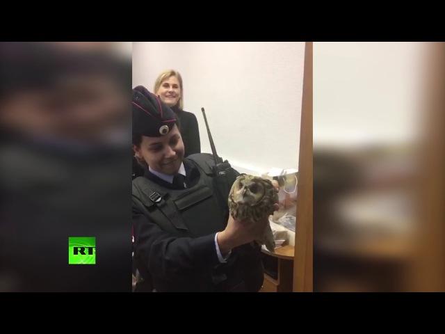 Сотрудники Министерства иностранных дел России спасли сову и назвали её Мидушкой