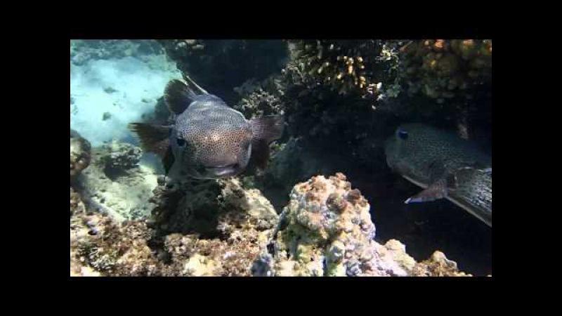 Подводный мир отеля Three Corners Fayrouz Plaza