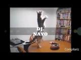 DJ. NAYO