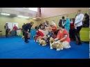 Монопородная выставка ШИ ТЦУ Нижний Новгород Ши-тцу Мила Dog Show