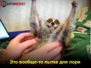 Вам кажутся милыми эти лемуры? Смотрите, чем расплачиваются животные.