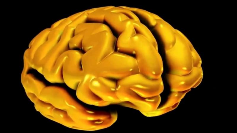 Анатомия полушарий большого мозга » Freewka.com - Смотреть онлайн в хорощем качестве
