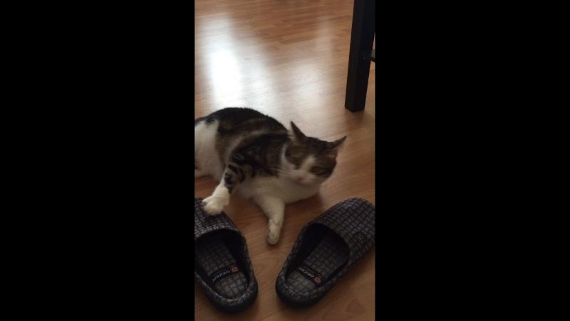 Çorap delisi Şapşikkkkk..)