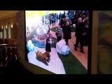 Павильон зоопарка на Московском культурном форуме