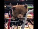 Собачка или медвежонок?