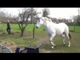 Лошадь лягнула девушку ...