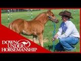 Clinton Anderson Foal Training - Downunder Horsemanship
