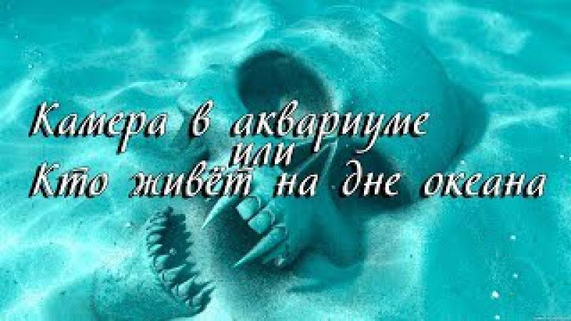 Камера в аквариуме или кто живёт на дне океана