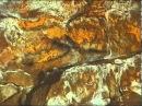 La cueva de Altamira Historia de un descubrimiento