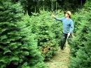 Весенняя ОБРЕЗКА ХВОЙНЫХ растений мастер класс