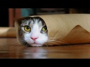 ТЕСТ НА ПСИХИКУ, КТО ЗАСМЕЁТСЯ ТОТ ПСИХ! Лучшие Приколы с котами 2016