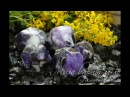 Мыловарение•Мыльный камень - Аметист•Мыло ручной работы•МК•Soap•