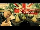148 Острые перцы на гидропонике. Британский гровинг. Grow in GB. серия 2