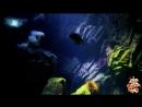 ♛♫♥ Sound Apparel - Victoria (Original Mix 2017 Remaster) (Pulsar Recordings) ♥♫♛
