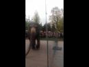 По улице слонов водили