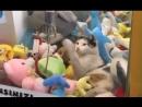 Gamer disturbs cat sleeping inside claw machine in Turkey