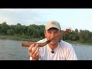 Ловля сома на саранчу. Река Волга